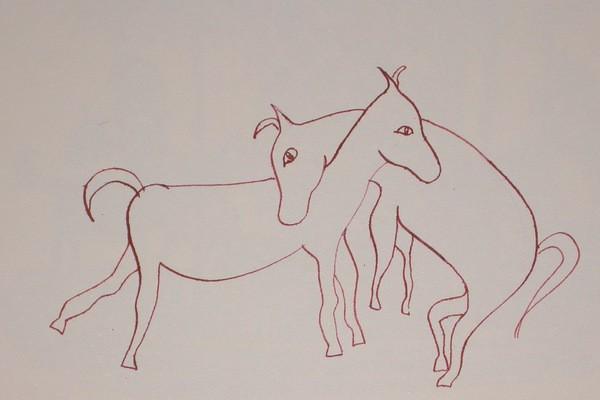 cover image - Ezels, donkeys, asini...